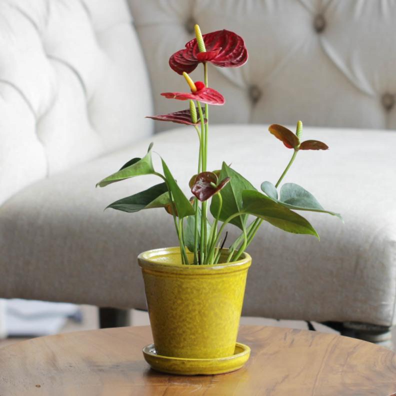 Vasos e Cachepots Dicas de Decoração Dadivária cachepot ceramica colorida